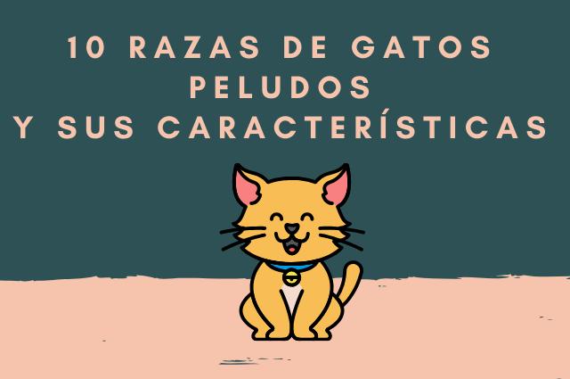 gatos peludos