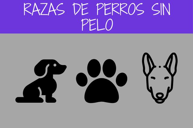 razas de perros sin pelo