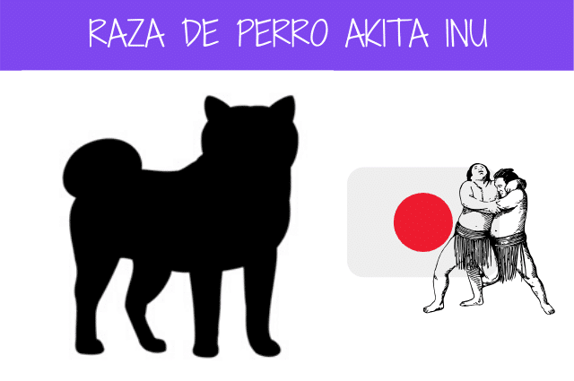 raza de perro akita inu
