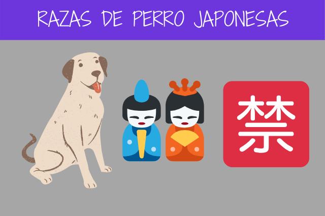 razas de perro japonesas