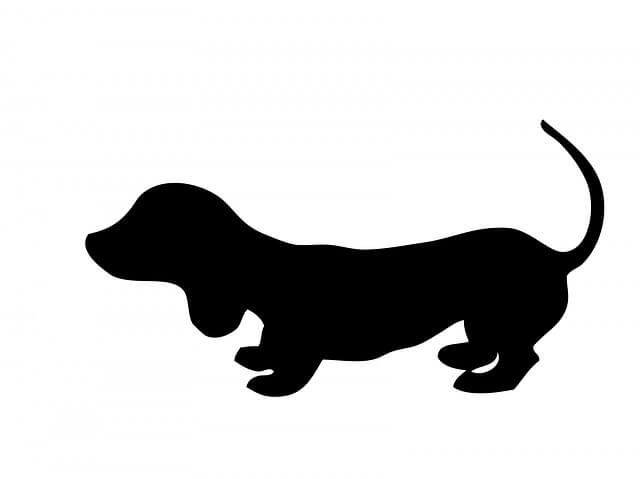 silueta perro salchicha cachorro