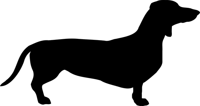 silueta perro salchicha