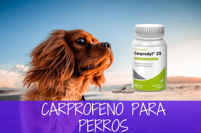 Carprofeno para perros
