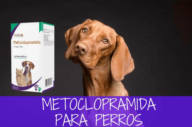 Metoclopramida para perros