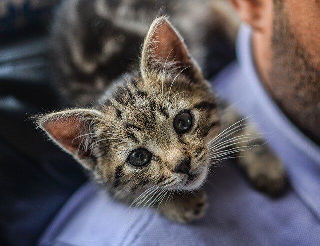a que edad abren los ojos los gatos