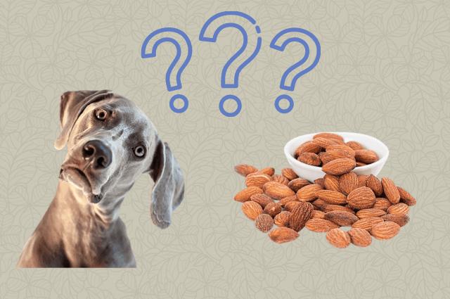 pueden los perros comer almendras