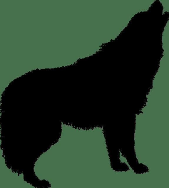 silueta lobo aullando