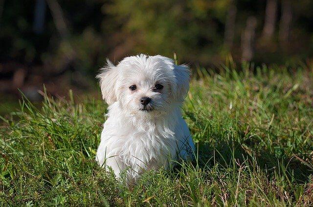 perro blanco cariñoso