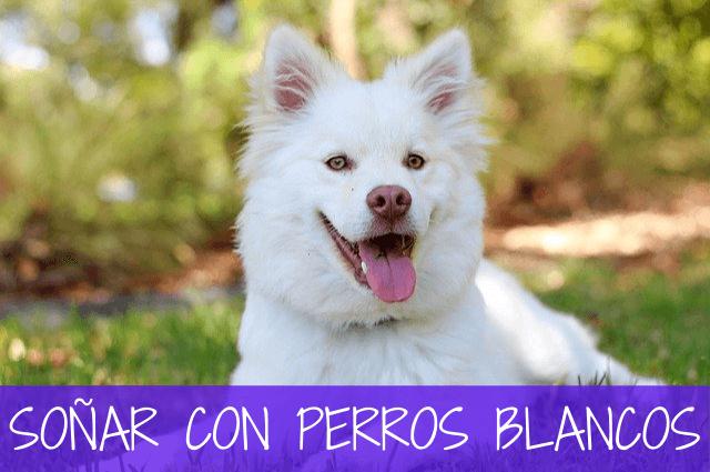 soñar con perros blancos
