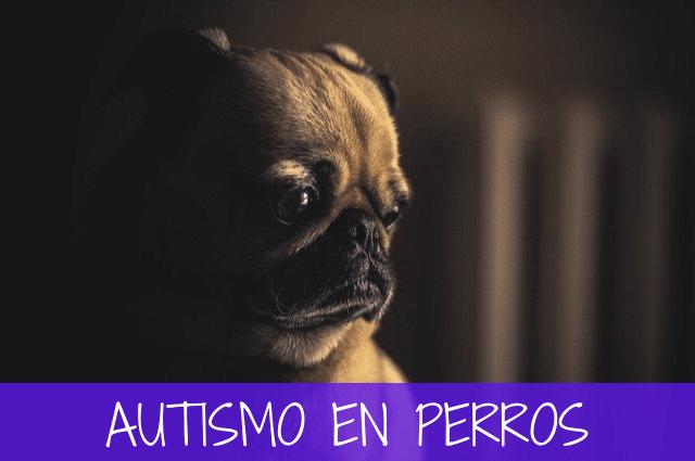 autismo en perros