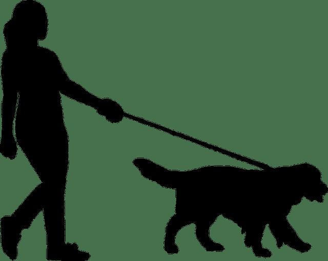 curar ataxia en perros