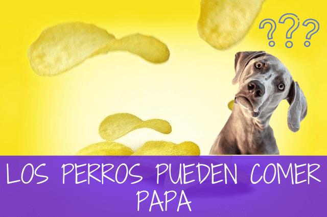 los perros pueden comer papa