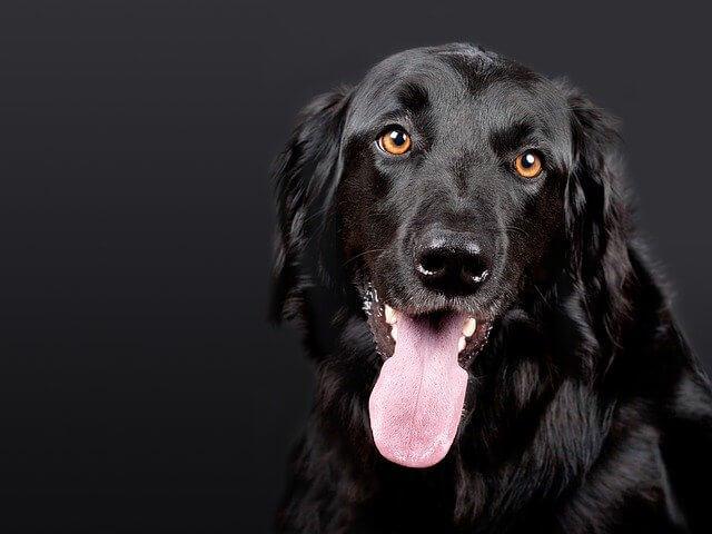 perro negro amigable