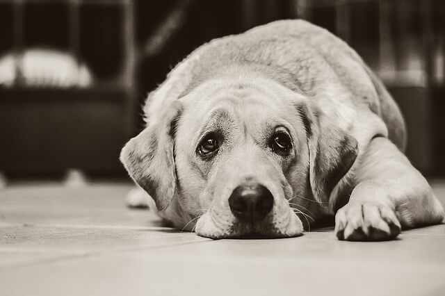 sintomas de autismo en perros