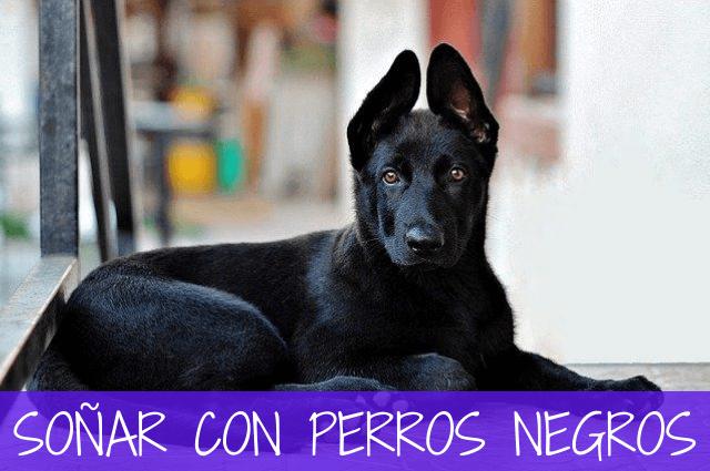 soñar con perros negros