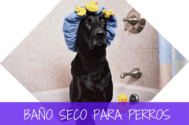 baño seco para perros