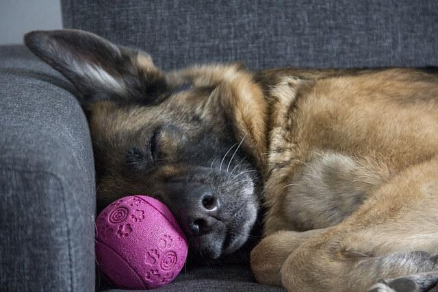 perro dormido en sofá