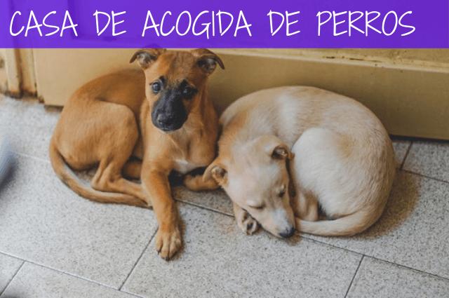 casa de acogida de perros