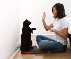 Cómo entrenar a un gato para Dar la mano