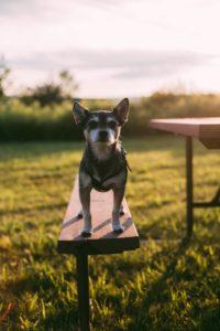 Cómo enseñar a un perro a caminar con la correa suelta
