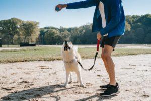 Cómo enseñarle a un perro a venir cuando lo llamen